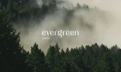 Evergreen is a charming typeface with a nostalgic feel and modern lines, a wedding between different font styles by designer Maria . Contemporary Fonts, Different Font Styles, Free Typeface, Best Free Fonts, Font Free, Font Combinations, Wedding Fonts, Free Wedding, Web Design Projects