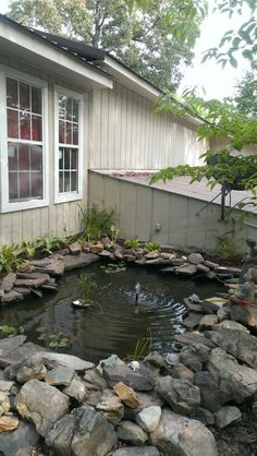 My Goldfish pond 2015