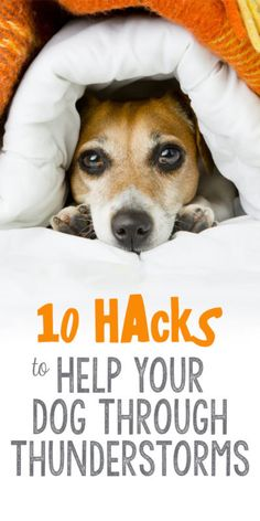 "Let's face it - storms are scary. They're startling, confusing, and a major source of anxiety for our furriest family members. This thunderstorm season, make sure your pet is prepared to ""weather the storm"" using these 10 hacks for pet parents:"