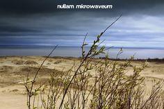 Wild Beach Of Parnidis Dune