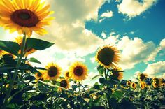 Sunflower Sky - a magical day -- Untitled   by artsy_T (Tina) children's art teacher