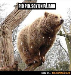 Pio Pio, soy un pájaro. Tumblr Funny, Funny Memes, Funniest Memes, Funny Cute, Hilarious, Funny Pix, Super Funny, Funny Videos, Funny Animals