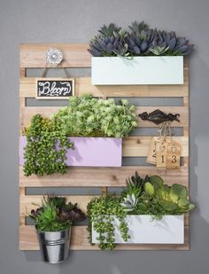 Succulent Garden Wood Pallet Board is part of Pallet garden Succulents - Create a Succulent Garden Wood Pallet Board using faux succulents, wood bins, hooks and knobs for decoration Supplies available at Craft Warehouse Faux Succulents, Succulents Garden, Diy Pallet Projects, Wood Projects, Pallet Ideas, Wood Ideas, Suculentas Interior, Raised Vegetable Gardens, Palette Diy