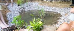 A step by step guide to building your own natural pond using only the existing soil and bentonite clay to seal the bottom. Anyone can do this!