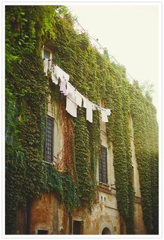 Just don't love the laundry on display - but looovvveee the ranking plants...