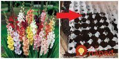 Finta mojej svokry pre najkrajšie gladioly a cibuľoviny: Keď ich budete dávať do zeme, skúste túto radu a bude vám ich obdivovať celá ulica! Exterior, Table Decorations, Gardening, Holiday Decor, Home Decor, Gardens, Growing Up, Roses, Gladioli