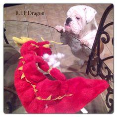 Gunner saying good bye to his dragon baby he tore up...