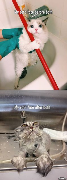 This is how a bath changes a pretty cat's face. |LOL, Damn! Spread Laughter And Awesomeness!