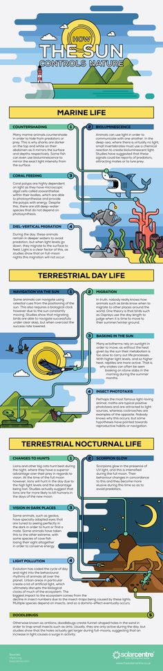 How the Sun Controls Nature Infographic