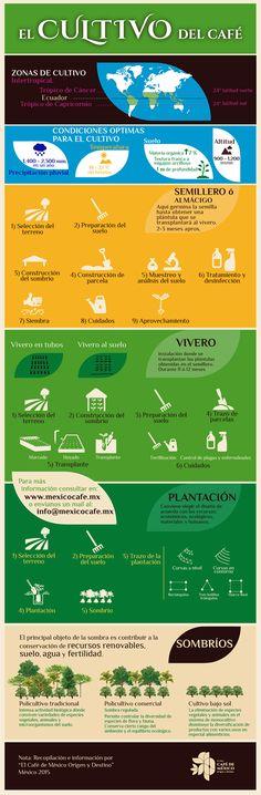 El Cultivo del Café. Algunos de los elementos claves para su cultivo.e