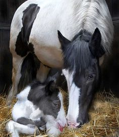 The mare bowed her head to where her newborn foal lay and neighed so softly as if to say, I will help you to stand, to walk, to run, to play. I promise I will not go away, until you are big and strong like me, someday. And when I am gone I know you will be okay. As I have taught you well and loved you every day. For that is a Mother's Way.