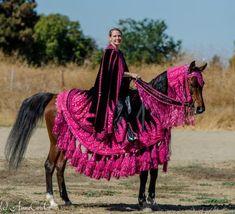 55445 4736946820052 998478065 O - My Girls, Bella and Tie - Gallery - Arabian Horse Breeders Network