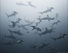 phototips.biz: Alexander Safonov's Amazing Underwater Photos
