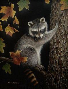 "11""x14"" Art Print Wildlife Animal Raccoon Tree Autumn Fall Portrait Night KR   eBay"