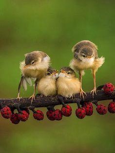 Spring Time Fantasy Photography at: http://www.pinterest.com/oddsouldesigns/springtime-soul/ #birds #animals