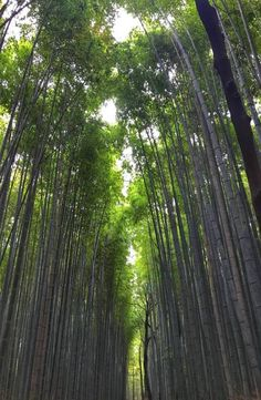 Kyoto's Arashiyama Bamboo Forest is located in western part of Kyoto near the base of the Arashiyama Mountains. How to get to Arashiyama Bamboo Forest Kyoto Japan, Backpacking, Bamboo, Waves, Photo And Video, Landscape, Plants, Pictures, Outdoor