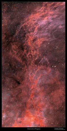 "Filaments of Cygnus ""Credit: J-P Metsävainio "" Cosmos, Space Photography, Major Tom, Carl Sagan, Deep Space, Space Exploration, Heavens, Outer Space, Astronomy"