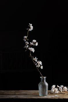 Spring by Raquel Carmona Photographer