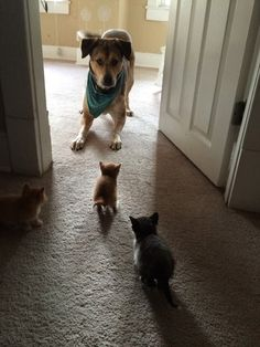 They've Got Me Surrounded!