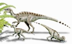 Skull of a Juvenile Heterodontosaurus Provides Information on Dinosaur Diets