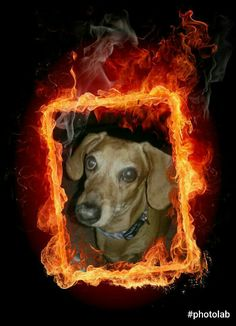 One handsome HOT DOG!!!!!!
