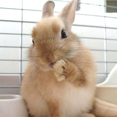 What a darling little rabbit!