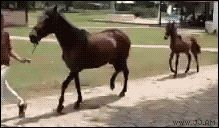 ridiculous walking horses