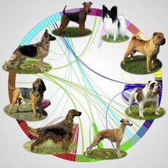 Dog Family Tree Reveals How Canine Breeds Came To Be – iHeartDogs.com