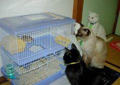 Fotos graciosas de gatos y un ratón