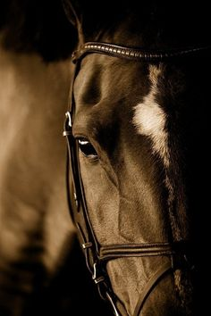 We share with you amazing horse pictures in this photo gallery. I'm sure you will like these horses.