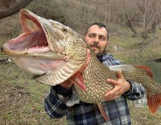 A giant Pike ! 135 cm  Salto Lake in Italia Recommended by http://www.fishinglondon.co.uk/
