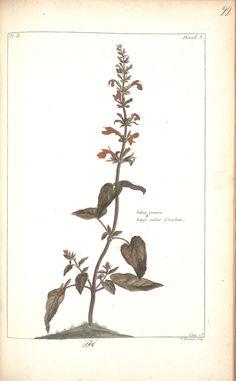 1776 buchoz -  Histoire universelle du règne végétal, ou nouveau dictionnaire physique et economique de toutes les plantes qui croissent sur la surface du globe. - Biodiversity Heritage Library