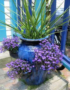 Beautiful! Lobelia in a large strawberry pot with a spike in the top.