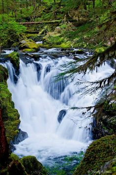 Everything Washington - Canyon Creek Falls Upper Sol-Duc ONP- Olympic National Park Photo Credit- Tim Owens TAO Photography Forest Pictures, Cool Pictures, Canyon Creek, Beautiful Waterfalls, Nice View, Beautiful Places, National Parks, Scenery, Places To Visit