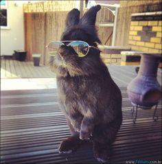 coelho-oculos-de-sol-01
