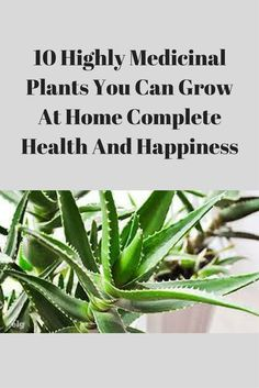 10 Highly Medicinal Plants You Can Grow At Home Complete Health And Happiness