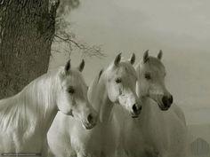 pferdebilder als hintergrund | Download Hintergrund Pferde, Pferd, drei Freie desktop Tapeten in der ...