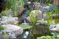 Why you need a backyard pond