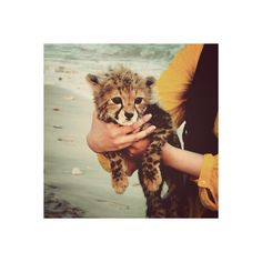 tumblr.pics - Tumblrで人気の画像まとめ ❤ liked on Polyvore featuring animals, pictures, backgrounds, photos and cats