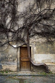 wood door with tree. This looks to me like a tree in mourning for what once was her tree-mate -- now turned into a door. no i don't smoke .