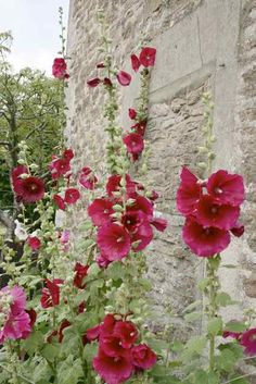 English Cottage Garden...plant these around the front on the right of the porch and right of the back stairs.