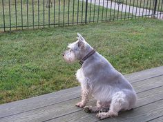 Gus on the Beach House Deck by millywilly, via Flickr