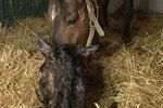 [VIDEO] 5 Things You need to Know: Mare Fertility