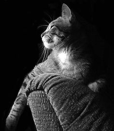 """""""When addressed, the gentleman cat, does not move a muscle. He looks as if he hasn't heard."""" --May Sarton cats http://annabelchaffer.com/"""