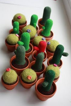 beautiful collection of cactuses