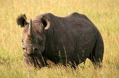 15 animales extintos en los últimos 250 años (11)