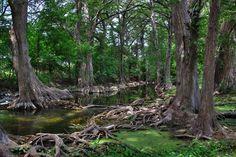 Panoramio - Photo of Cibolo Creek at the Cibolo Nature Center, Boerne, Texas Hill Country Resort, Texas Hill Country, San Antonio, Cibolo Creek, Texas Parks, Texas Travel, Nature Center, Photo Location, Nature Photos
