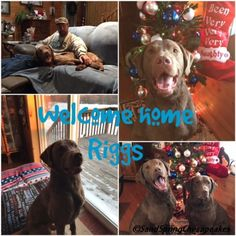 Welcome Home Riggs – Sand Spring Chesapeakes