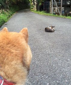 Shiba Shiba Pinterest Animal And Dog - Three shiba inus stick their heads through wall to greet passers by