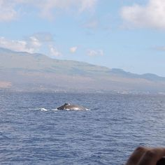 Maui whale watching is some of the best in the world and we pride ourselves in offering the best whale watch & snorkel tour. Whale sightings guaranteed.
